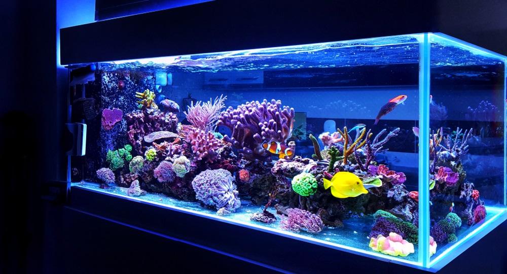 Aquarium beste