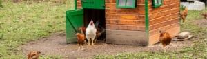 Beste kippenhok