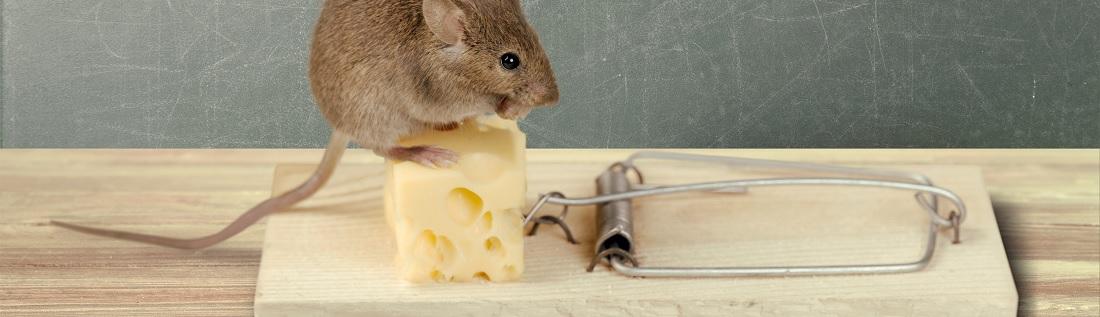 Beste muizenval