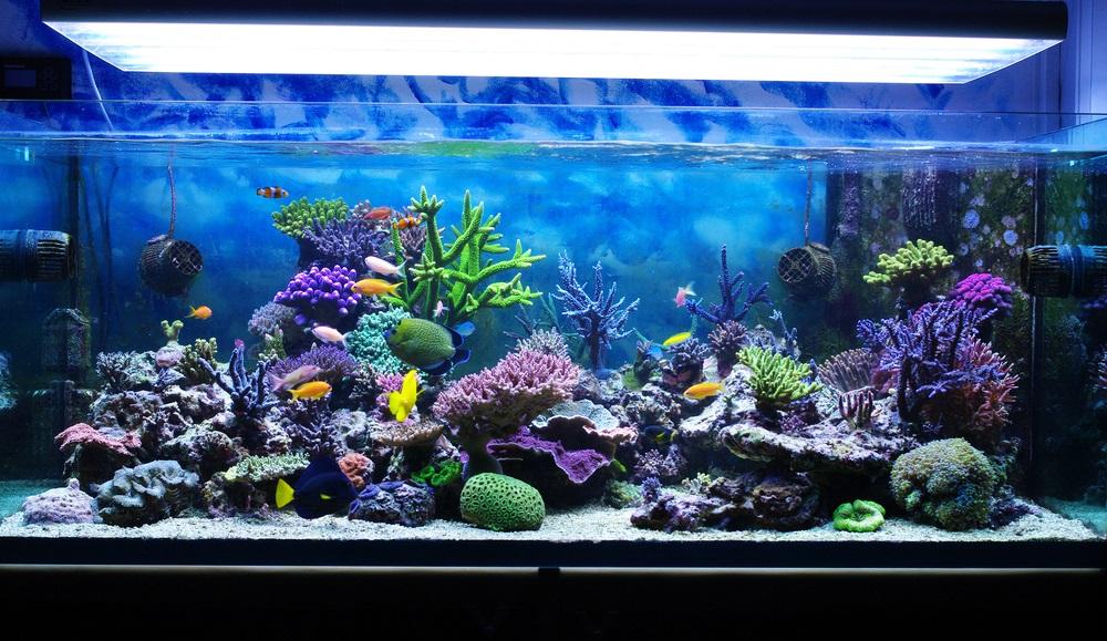 Aquariumfilter beste
