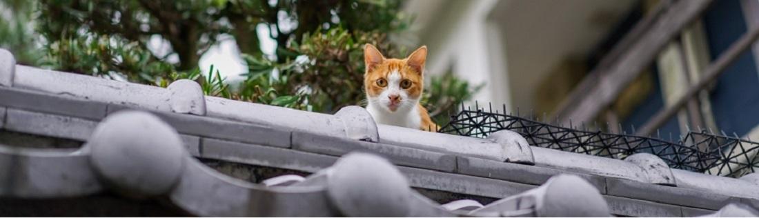 Beste-kattenverjager
